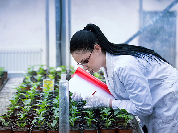 A scientist using genetics tech on plants